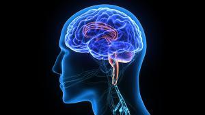 neurologist Nastaran Bavani